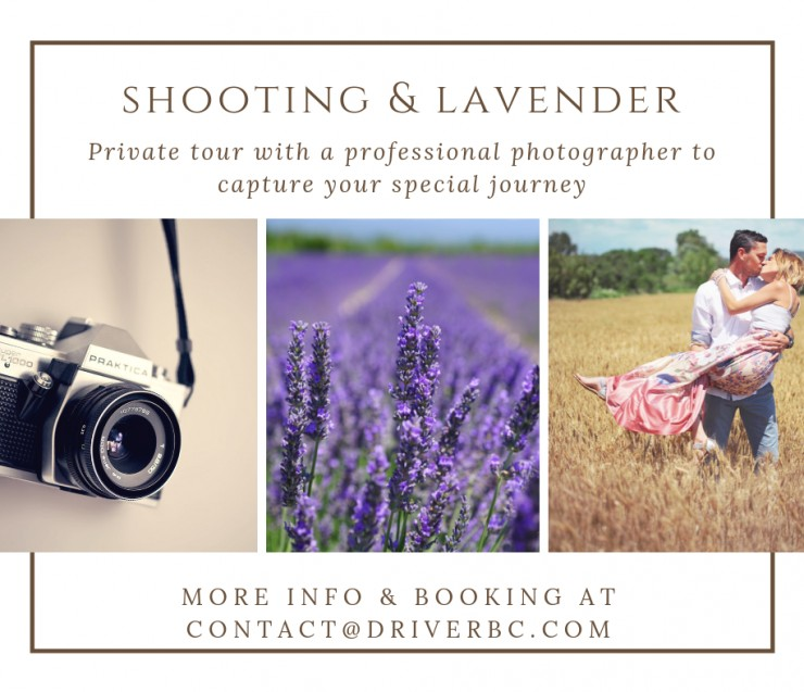 Profesionnal Shooting in the lavender fields