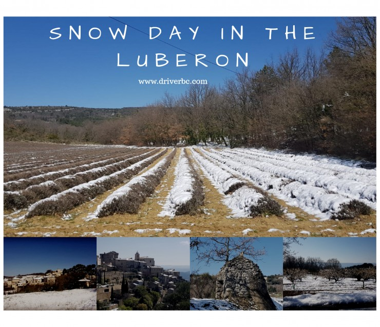 Snowfall in the lavender fields in the Luberon !