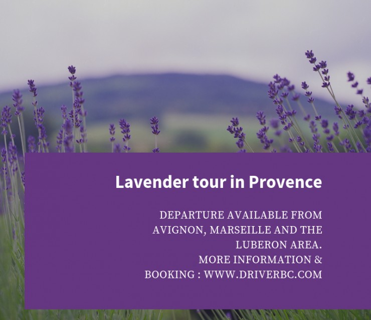 On the lavender road !
