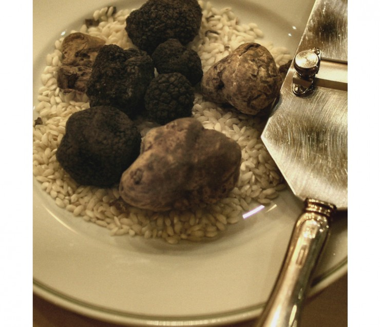 Truffle hunting in the South Luberon