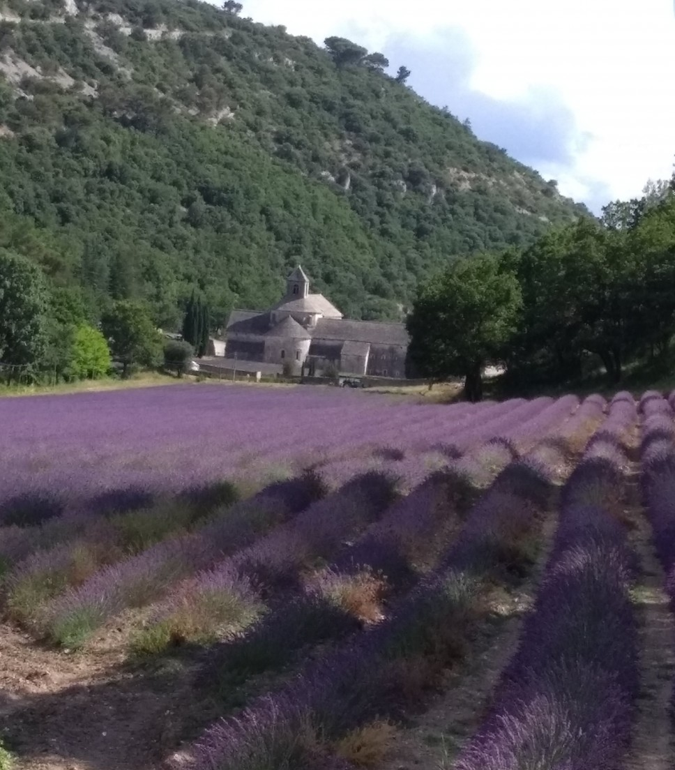 The lavender road (in the lavender season only)