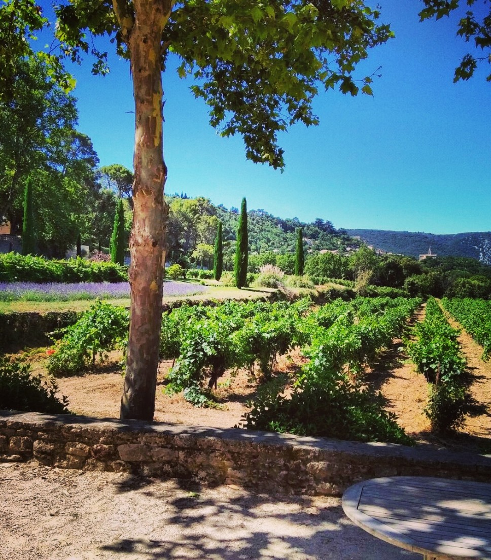 Wine & Olive oil in Provence